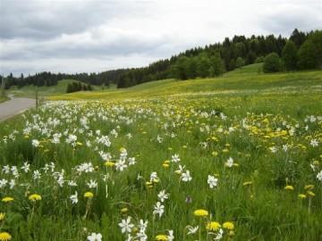 medium_paysage-fleur-montagne-couleurs-pesse-709492.2.jpg