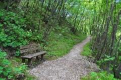 7626189-banc-dans-le-chemin-de-gravier-entoure-de-broussailles-et-des-pins[1].jpg