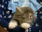 chat qui rêve.jpg