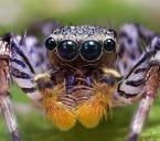 araignée 1.jpg