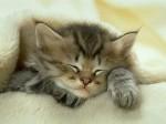 chat qui dort 2.jpg