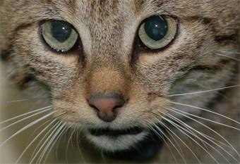 interprétation des rêves,Christiane Riedel interprète de rêves,chat,