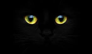 blog d'interprétation des rêves,christiane riedel spécialiste d'interprétation des rêves, marianne schertenleib, chat noir, petits pois,sérieux et profondeur du travail avec les rêves