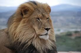 interprétation des rêves,christiane riedel spécialiste de l'interprétation des rêves,alchimie,rêve alchimique,Jung,bien,mal,lion,mort du lion