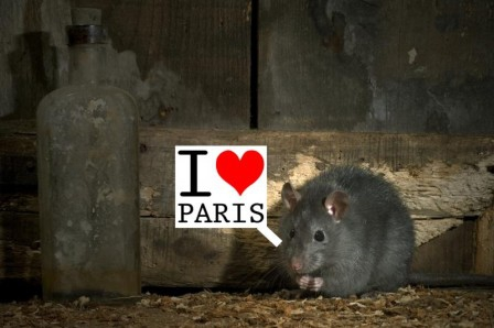 h-4-2002820-1269436496 rat paris.jpg