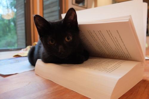 interprétation des rêves,christiane riedel spécialiste d'interprétation des rêves, marianne schertenleib, chat noir, petits pois,sérieux et profondeur du travail avec les rêves