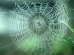 spinnenweb.jpg