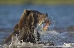 ours et poisson.jpg