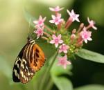 Papillon-3.jpg