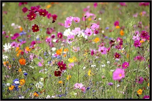 tapis-acupression-champ-de-fleurs-charmant-tapis-champs-de-fleurs-elegant-belle-carrelage-piscine-et-tapis-of-tapis-acupression-champ-de-fleurs.jpg
