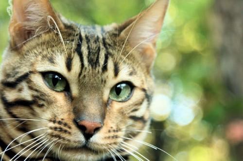 rêves,interprétation des rêves, Christiane Riedel interpète de rêves,chat,casterun chat, chat-dieu