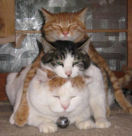 3-chats-empiles-les-un-sur-les-autres[1].jpg