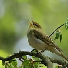 jett.fr oiseau chante.jpg