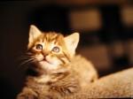 chat joue1.jpg