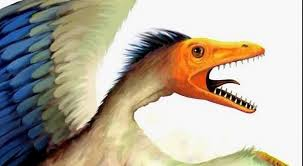 poules dents.jpg