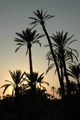 palmeraie.jpg