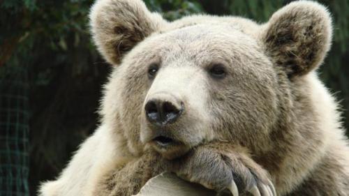 japon-lemployee-dun-parc-animalier-tuee-par-un-ours.jpg