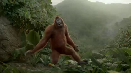 singe qui chante 3.jpg